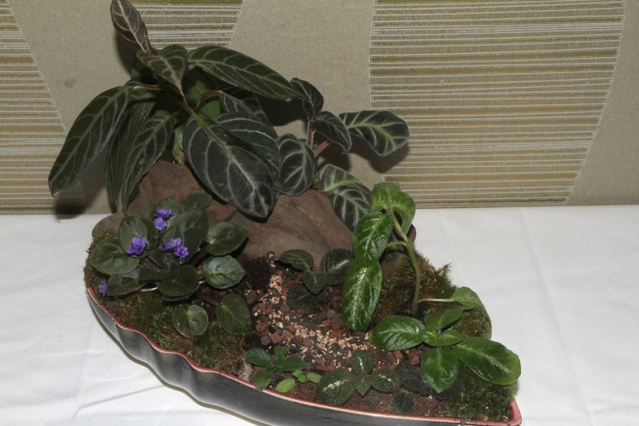 2014 Convention - Class 66 Tray Landscape
