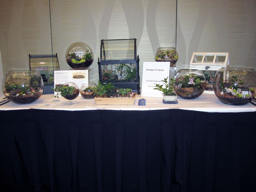2014 Convention - Commercial Displays - Class 76 Display table with a grouping of 5-10 gesneriads - Judges Award of Merit and Best in Section Q (Commercial Display)