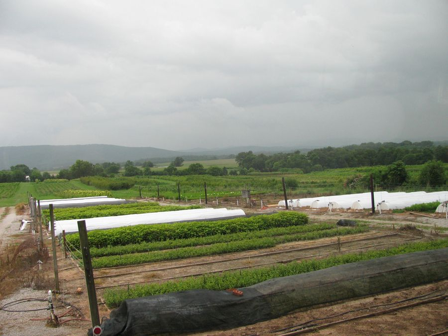 One of the many growing areas at Don Shadow Nursery in South-Central Tennessee