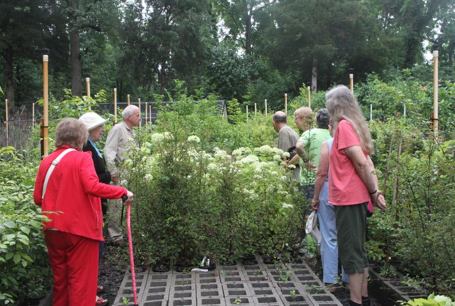 Touring the nursery and learning about the plants