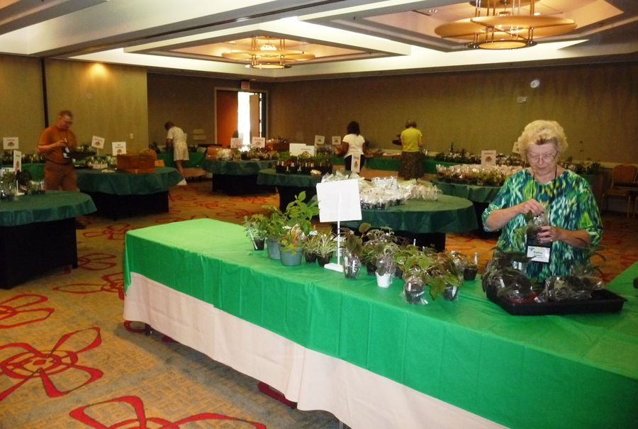 Kathy Spissman and the plant sales team starting to set up plant sales