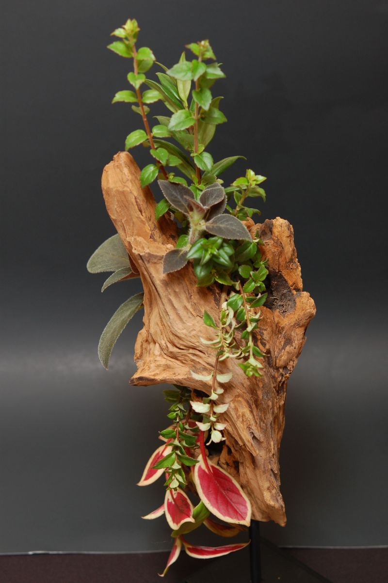 """2015 Convention –  Arrangements of Fresh-Cut, Dried, and/or Growing Gesneriad Material - Class 54 """"Muir Woods"""""""