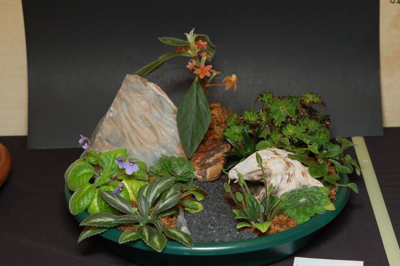 2015 Convention – Plantings of Growing Gesneriad Material - Class 65 Tray Landscape