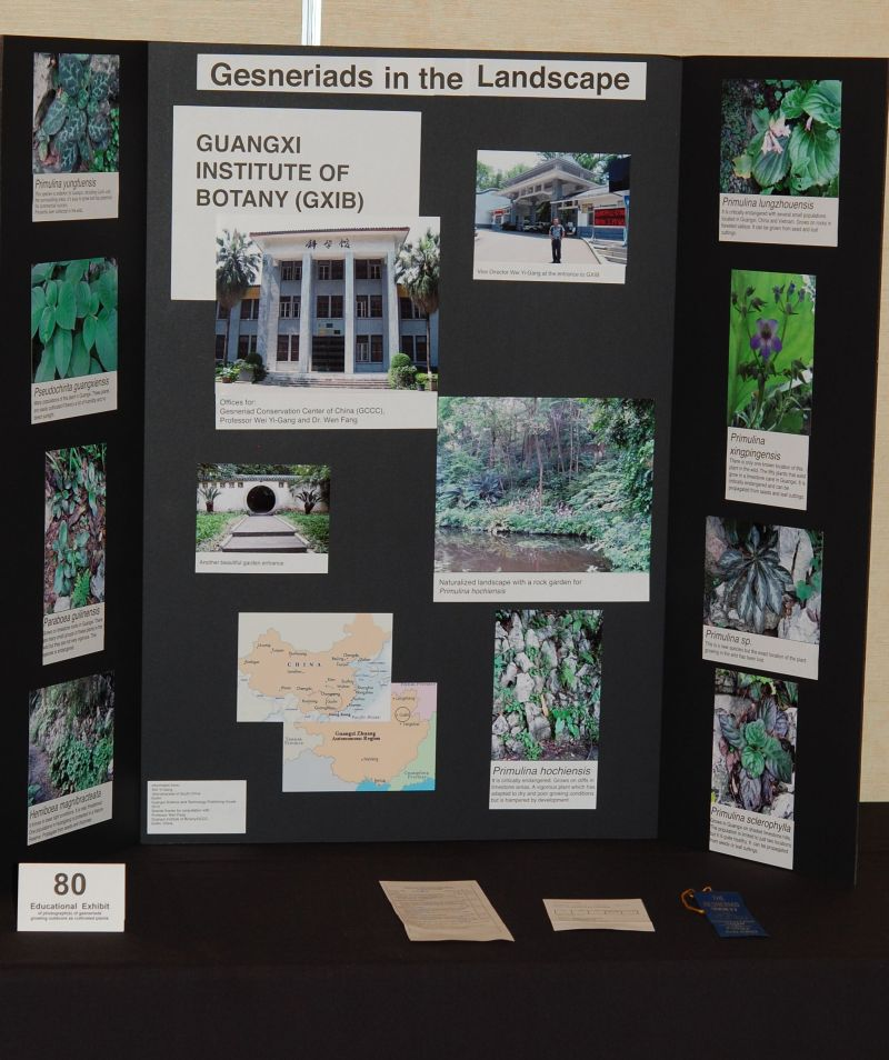 2015 Convention – Educational Exhibits - Class 80 Gesneriad Promotion: An exhibit of photograph(s) of gesneriads growing outdoors as bedding, accent, or container plants