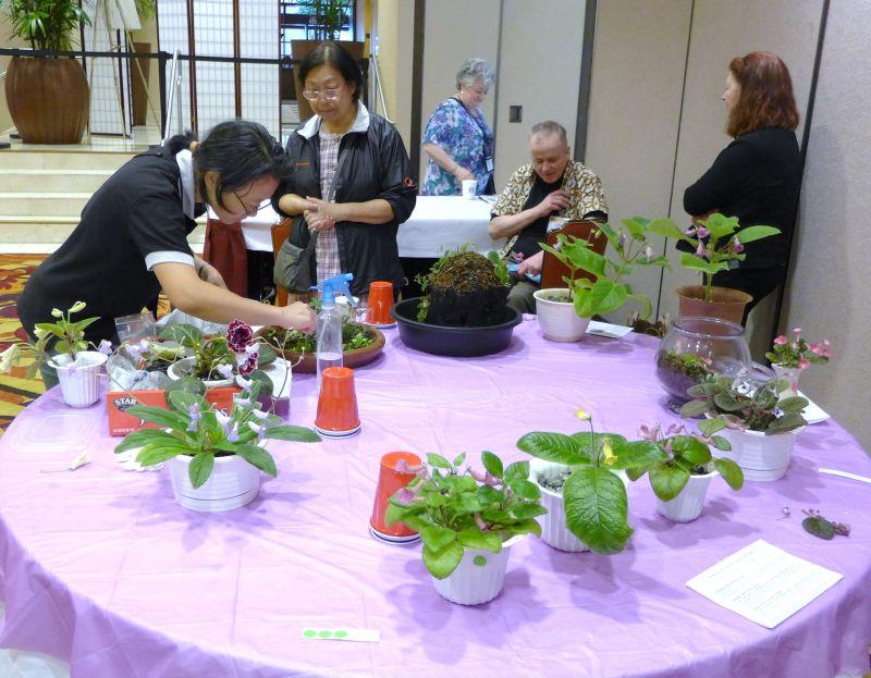 Lan Wu grooming her entries
