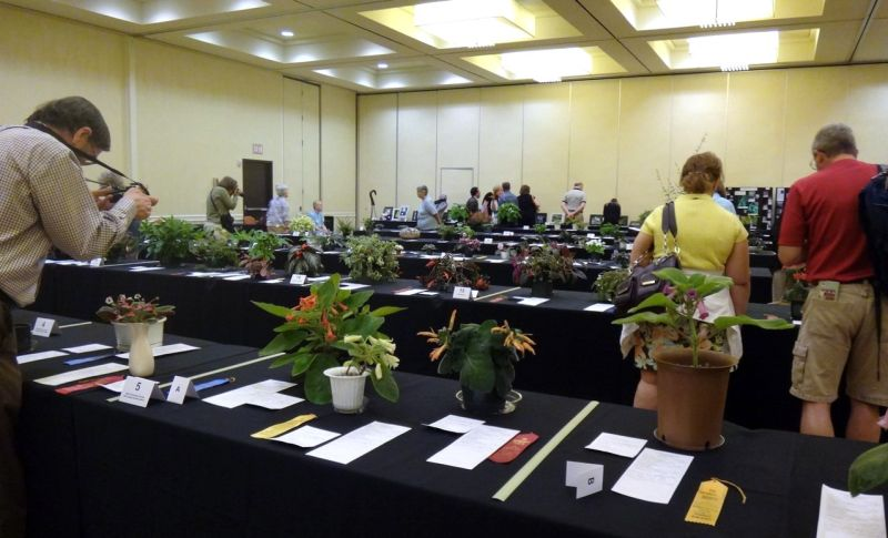 Open time for photographing the flower show
