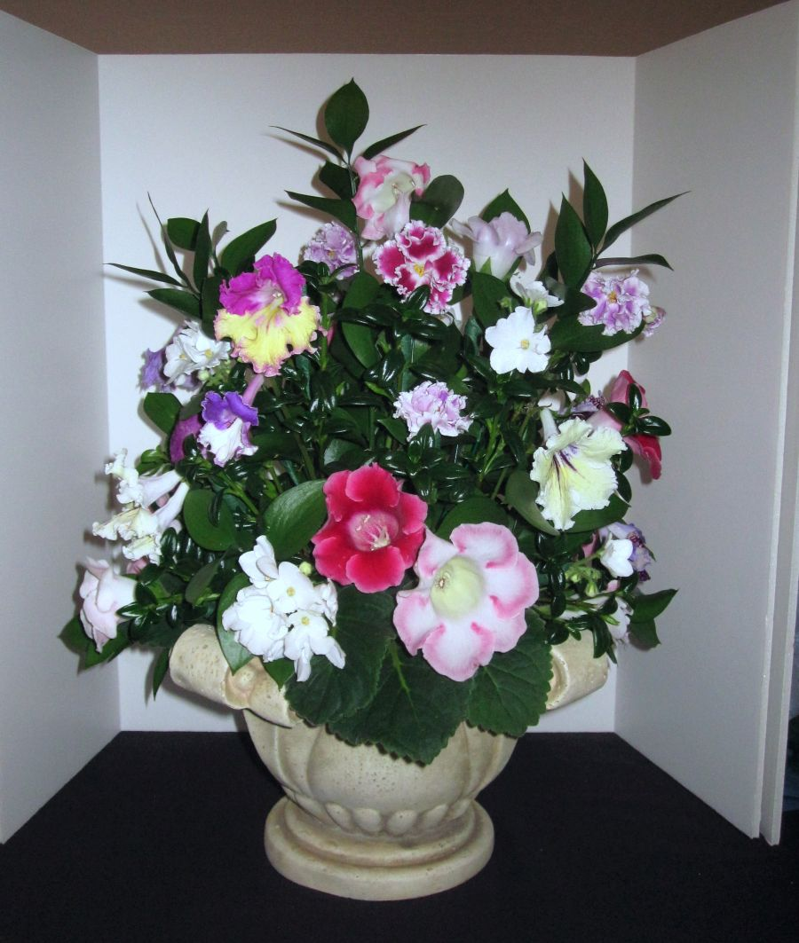 2016 Convention<br>Arrangements of Fresh-cut, Dried, and/or Growing Gesneriad Material<br>Class 52