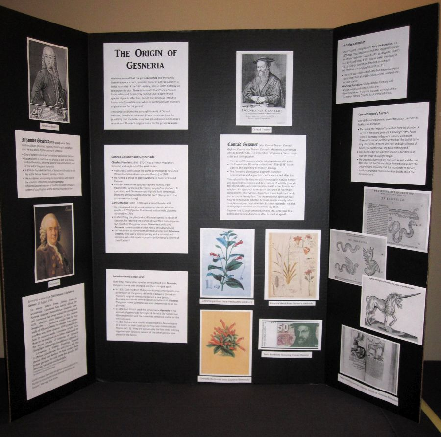 2016 Convention<br>Educational Exhibits<br>Class 77 Exhibit illustrating phases of scientific or historical research or gesneriad promotion<br>RUNNER-UP TO BEST COMMERCIAL/EDUCATIONAL