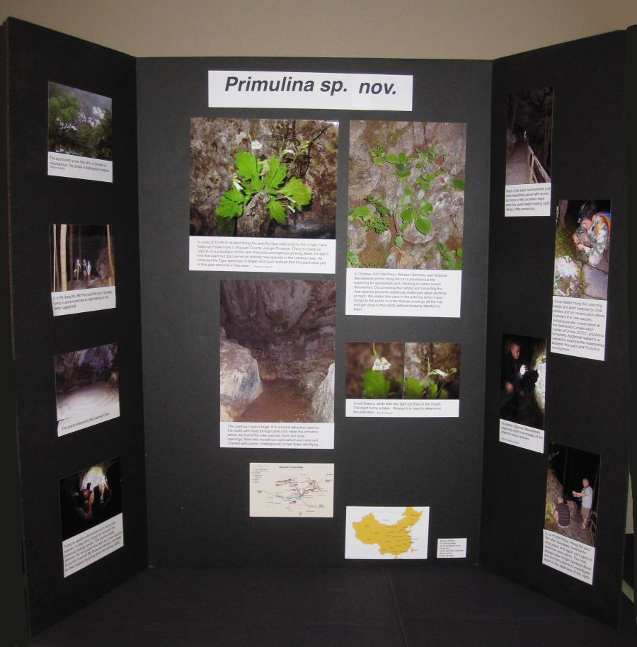 2016 Convention<br>Educational Exhibits<br>Class 79 Exhibit of photograph(s) of gesneriad plant material that because of its seasonal nature or rarity in cultivation is not often exhibited live
