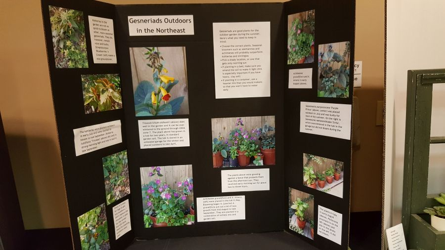 2016 Convention<br>Educational Exhibits<br>Class 80 Exhibit of photograph(s) of gesneriads growing outdoors as bedding, accent, or container plants
