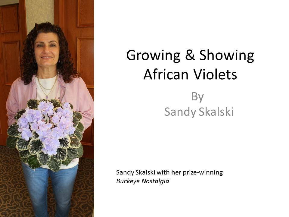 growing_showing_african_violets_-graphic_1024x1024
