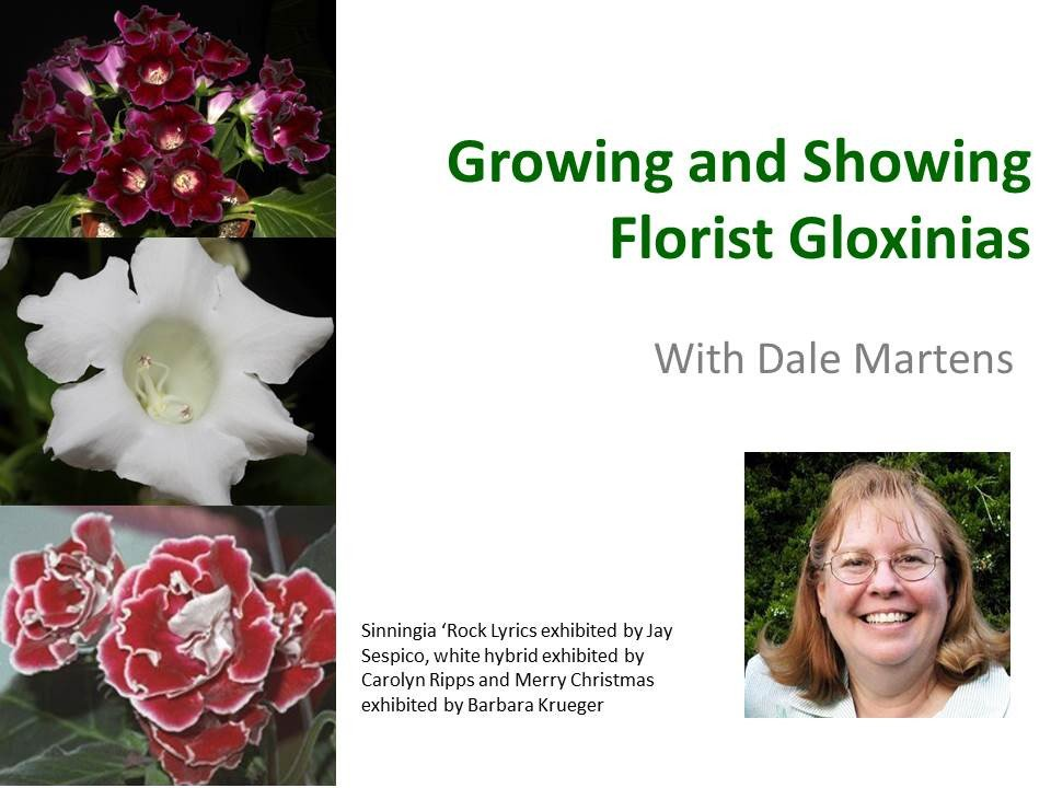 growing_and_showing_florist_gloxinias_graphic_1024x1024