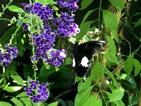 The indoor butterfly garden