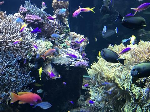 The colorful fish habitat