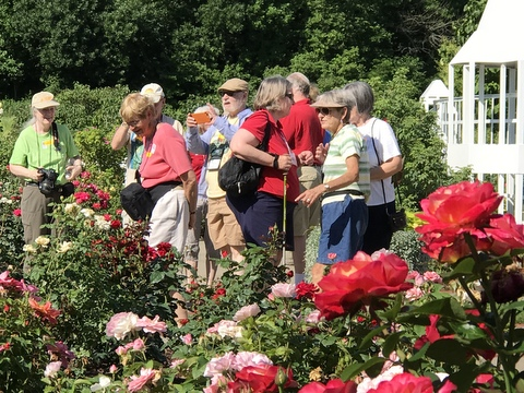 The colorful rose garden