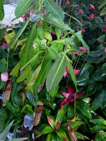Colorful tropical plants