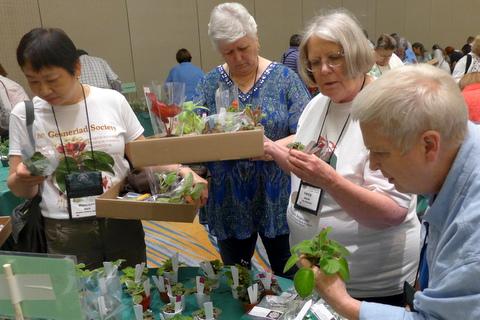 Maureen Mark, Bonnie Harris, Nancy Moerer, and Patty Daniel making selections at plant sales