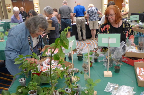 Dee Stewart and Dale Martens search for special plants