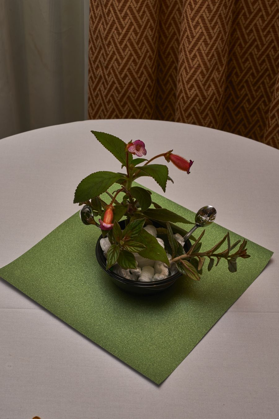 2018 Convention<br>Arrangements of Fresh-Cut Gesneriad Material<br>Class 53