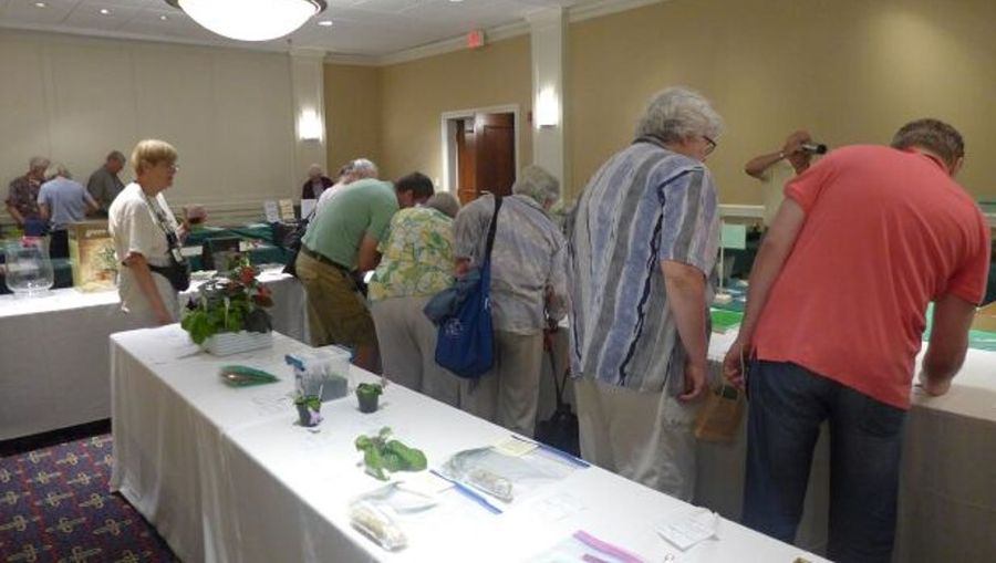 Betsy Gottshall monitoring the final bids