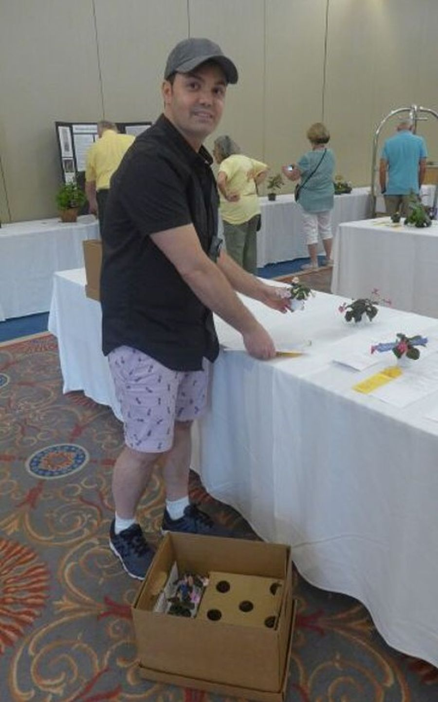 Jeremy Stevens packing his miniature sinningia entries