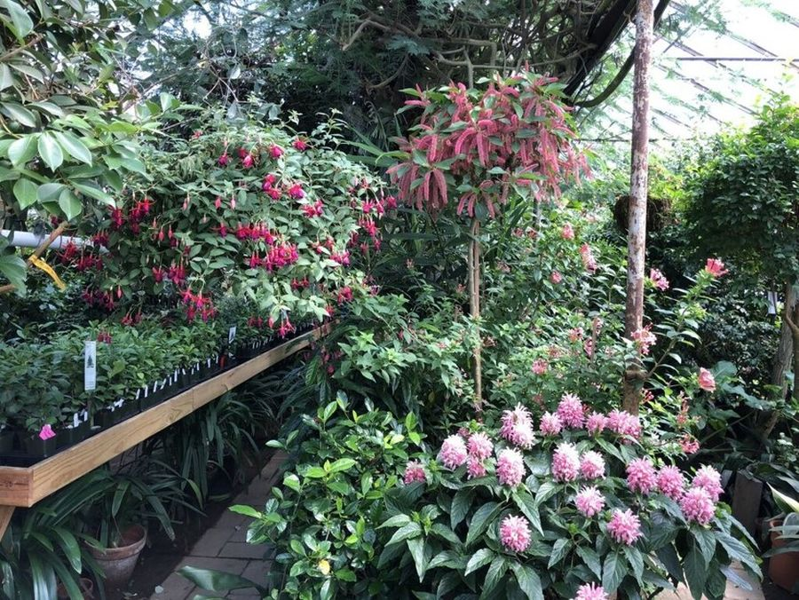 Other specimen plants to admire